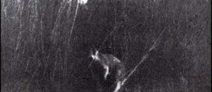 Phantom Kangaroos